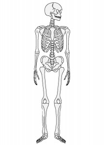 膝は股関節と連動して、腰(骨盤)から繋がる