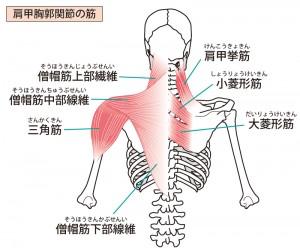 肩を治療すると、バネ指は楽になります。