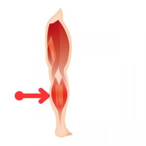 よく痛める場所(腓腹筋:内側)膝をまたいで付着している為