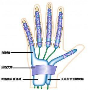 指は良く使うので丈夫に出来ています。しかし、痛めると治るのに時間は必要です。