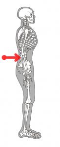 骨格と筋肉を同時に整えると、詰まった腰に遊びが生まれます。遊びができると、痛み痺れが改善されます。