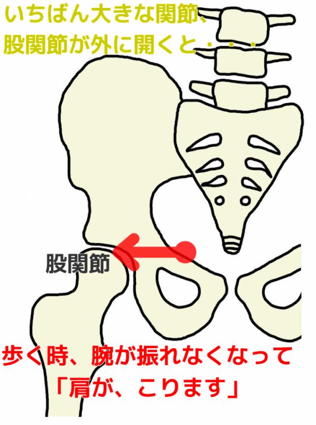 一番大きな関節、股関節が外に開くと…歩く時腕が振れなくなって「肩がこります」
