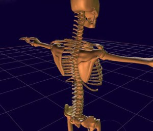 肩関節周囲炎の主な要因は変性=老化現象です